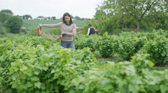 4K Farm worker harvesting crops in field with coworkers working in background - stock footage