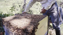 Hispanic apiarist collecting honey Stock Footage