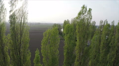Poplars, aerial video. N. About nature, green, leaves, summer, trees, firewood - stock footage
