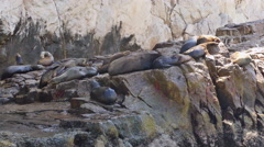 Sea lions in mexico Stock Footage