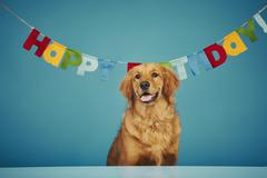 Golden retriever sitting in front of 'Happy Birthday' sign Stock Photos