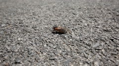 Lone Cicada Flaps Wings on Hot Driveway Stock Footage
