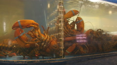 Live lobsters in a tank. St Lawrence market in Toronto, Canada. - stock footage