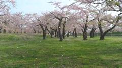 Hakodate Goryokaku park aerial shoot - stock footage