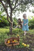 Young woman and toddler daughter harvesting fresh oranges in garden Kuvituskuvat