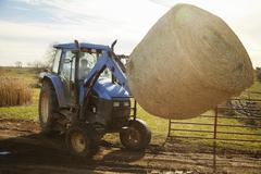 Boy farmer driving tractor moving hay stack on dairy farm - stock photo