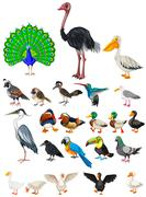 Different kind of wild birds Stock Illustration