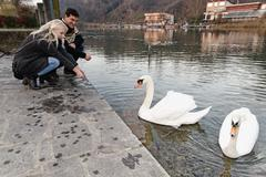 Heterosexual couple crouching by swans on lake, Lombardy, Italy - stock photo