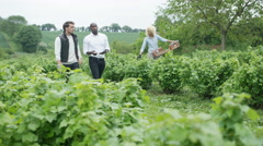4K Businessman with computer tablet outdoors in field, negotiating with farmer.  Stock Footage