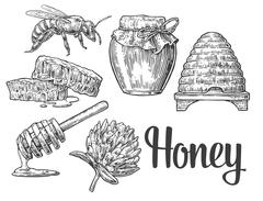 Honey set. Jars beer and honeycomb. Hand drawn design element. Vector engrave - stock illustration