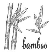 Bamboo trees with leaf white silhouettes and black outline on red circle. Han Stock Illustration