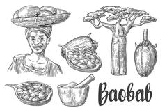 Baobab fruit, tree and seeds. Mortar and pestle. African woman carries a bask Stock Illustration