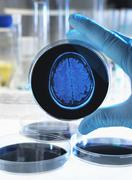 Scientist holding a petri dish with a brain scan illustrating research into Stock Photos