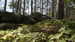 Mountain forest. Rocks. Grass. Panorama Stock Footage