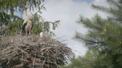 Several storks sitting in a nest on a pillar high voltage power lines Stock Footage