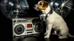 dog disco puppy animal pet funny music doggy hifi stereo ghettoblaster - stock footage