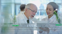 4K Portrait of smiling research scientists studying plant samples in laboratory. Stock Footage