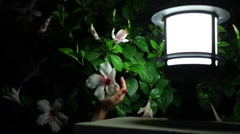 Female hand shakes large flower growing on a tree near lamppost Stock Footage