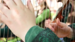 Close up view of woman is playing on her harp at sunny day Stock Footage
