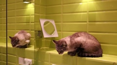 Grey cat sitting in green bathroom, reflected in mirror. Stock Footage
