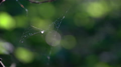 Small spider's net shaking in the wind Stock Footage