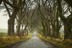 The Dark Hedges, Co. Antrim, Northern Ireland Stock Photos