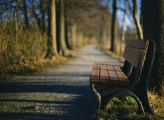 Bench on the side of a path lined with trees. Stock Photos