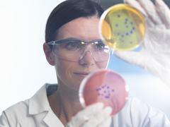 Scientist examining set of petri dishes in microbiology lab Kuvituskuvat