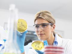 Female technician viewing agar (culture medium) plates with bacteria in a Stock Photos