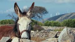 Wind turbines behind the donkey, greek rural nature. Stock Footage