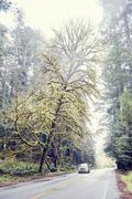 Car driving on road through redwood trees, Orik, Humboldt County, California, Stock Photos