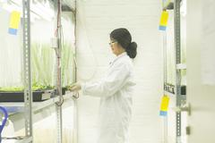 Female scientist choosing plant samples in  greenhouse lab Stock Photos