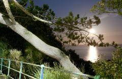 View of sea through trees, Eastbourne, East Sussex, UK - stock photo