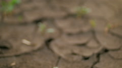 Small green plants are growing through cracked ground, moving focus Stock Footage