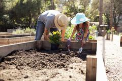 Mid adult man and daughter digging in community garden - stock photo