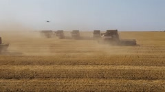 Many harvesters. Wheat harvest Stock Footage