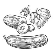 Fresh green cucumbers - whole, half, slices, leaf and flower - stock illustration
