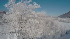 Trees covered with hoar frost Stock Footage