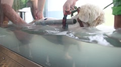 Dog doing hydrotherapy in veterinary hospital Stock Footage