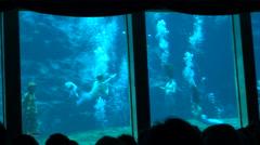 Weeki Wachee Florida Mermaid Show 4K Stock Footage