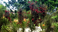 Colorful flowers in Balata Garden in Martinique Island Stock Footage