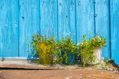 Row of three plant pots in front of turquoise painted hut Stock Photos