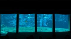 Famous Weeki Wachee Mermaid Show, Florida 4K Stock Footage