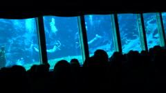 Mermaids Swim Underwater At Weeki Wachee Mermaid Show Florida 4K Stock Footage