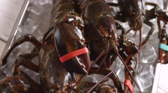 Raw lobsters laying on ice. Stock Footage