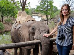 pat elephants, in preparation for an elephant safari, Victoria Falls, Zimbabwe - stock photo