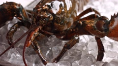 Lobster moving his claw. - stock footage