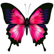 Butterfly. Vector illustration of red butterfly isolated on white background. - stock illustration