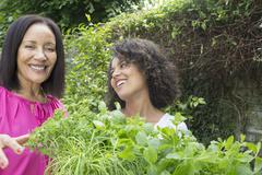 Mother and grown daughter picking herbs in garden - stock photo
