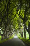 Tree lined road, Ballymoney, County Antrim, Northern Ireland - stock photo